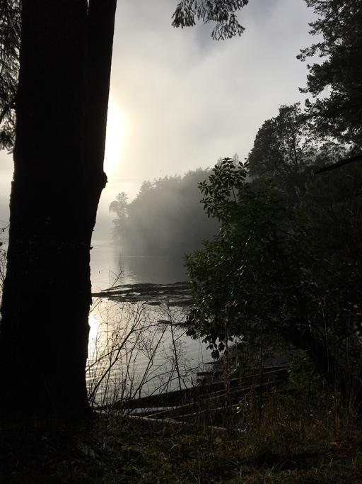 fog between the trees